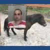 Florida man arrested after mounting horse