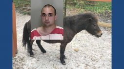 Florida man arrested after mounting horse